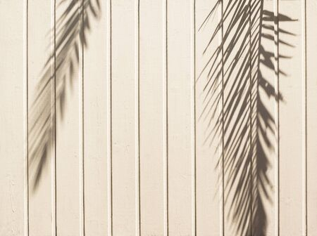 White wooden background with palm leaves shadow. Natural texture Imagens