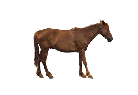 Side view of brown horse isolated on white background