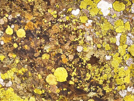 Stone surface with color lichen and moss stains. Natural background Stock Photo
