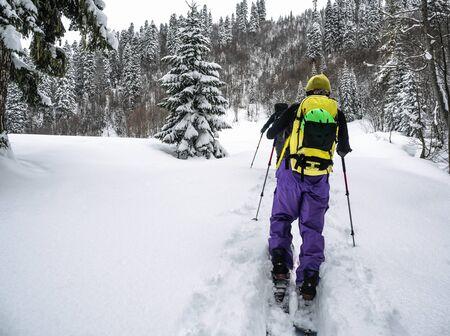 Hommes actifs ski de randonnée sur skis ou splitboards dans la forêt d'épicéas au jour d'hiver Banque d'images