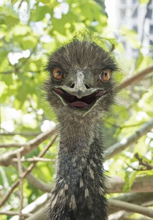 Head of funny ostrich or camel-bird smiling Stockfoto