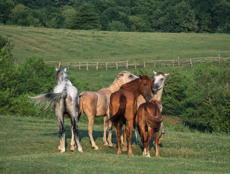 Horses family grazing on pasture with green grass Stockfoto