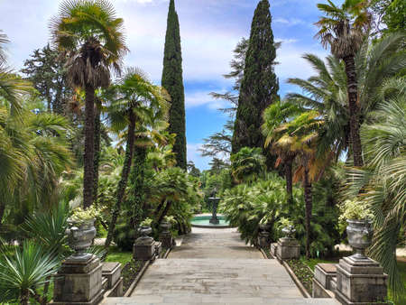 Panoramic view of park with staircase and tropical trees and palms. Travel destination in Sochi Dendrarium in Russia