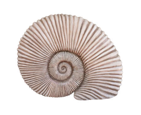 Fossil sea shell isolated on white background Stock Photo