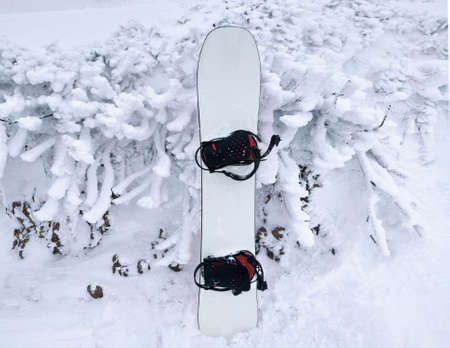 Snowboard and frozen plants. Snowy winter background
