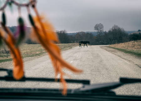 View inside of car moving on highway with horse crossing road