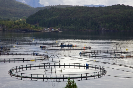 Fish farming site Stock Photo - 7667076
