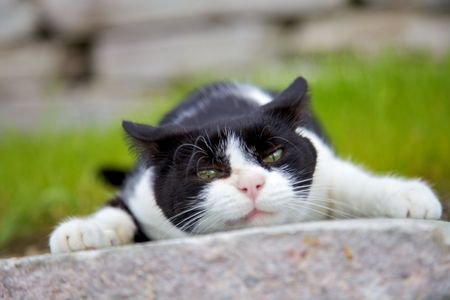 Angry cat on stone tile Stock Photo - 7670065