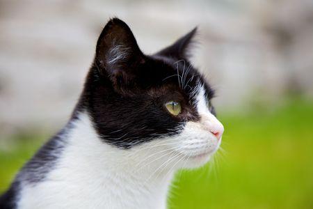 diminutive: Cat posing in profile