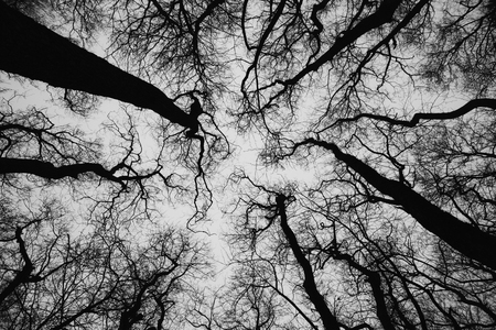 Treetops zwart en wit, silhouet tegen de hemel, vanuit een els bos naast het estuarium in Fredrikstad, Noorwegen. Stockfoto