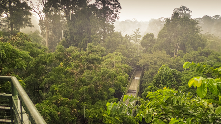 Rainy day in rainforest, wiew from the Canopy Walk Tower In Sepilok, Borneo Stock Photo