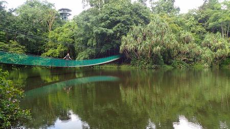 sandakan: The suspension bridge over the lake at Rainforest Discovery Centre In Sepilok, Borneo Stock Photo