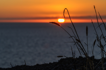 Sunset with som straws and the ocean Stock Photo