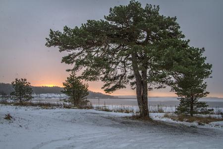 Winter landscape with pine tree Norway, Fredrikstad Stock Photo