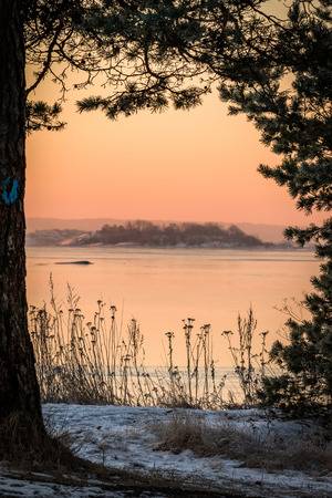 Winter landscape in pink morning light view of the ocean through pine trees