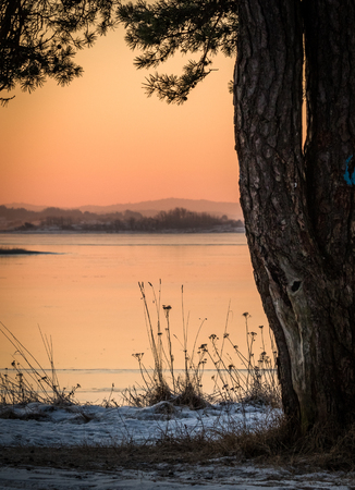 Winter landscape in beautiful morning light, view of the ocean behind pine trees. Norway, Fredrikstad