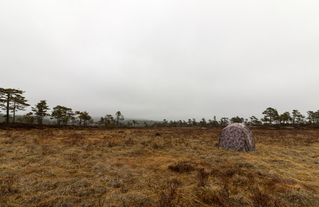concealing: camouflaged hunting blind ready for the photography hunt at the grouse lek place.