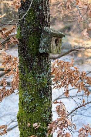 Very old nesting bird box covered in lichen and moss, hanging on a tree in spring Stock Photo
