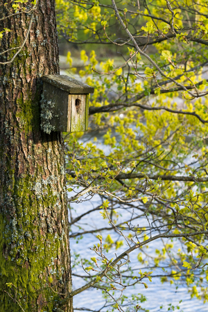 Very old nesting bird box covered in lichen and moss, hanging on a tree in spring, with green buds in the background