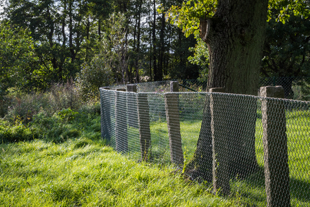 Green metal grille fence with tree and grass