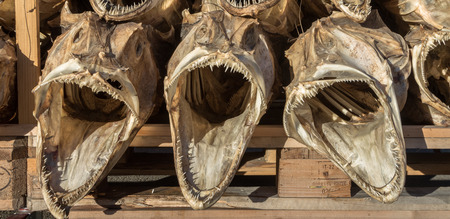 stockfish: three dried fish heads from cod stacked on a pallet Stock Photo