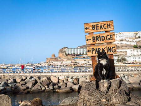 A stray cat posing on a tree stump in front of a sign pointing at the beach in Puerto Rico, Gran Canaria in Spain