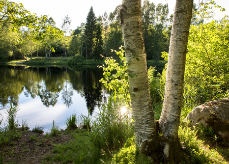 Two birch tree trunks in front of a beautiful pond with reflections in the water and green trees and bushes. Sun reflected in water. Birkenlund in Arendal, Norway