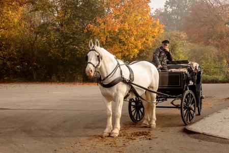 Klampenborg, Danimarca - 15 ottobre 2018: Cavallo bianco con carrozza, in attesa di alcuni turisti fuori dal cancello rosso a Jaegersborg Dyrehave vicino a Copenaghen.