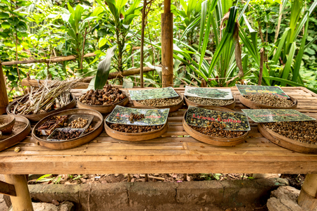 Different coffee beans on a table on a coffee plantation in Bali Stock Photo