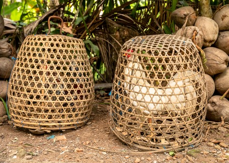 Fighting Cocks in bamboo cages, Bali, Indonesia Standard-Bild