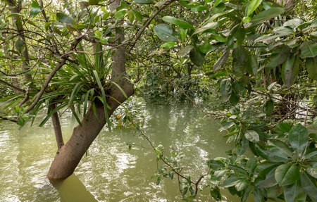 Trees standing in water in the mangrove forest in Singapore