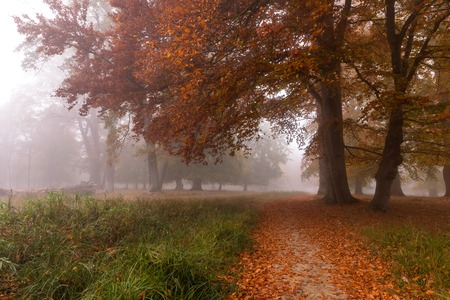 Small path in the fog. Autumn colors on a misty morning, beautiful trees in the forest in Denmark