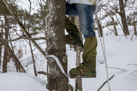 Legs of a man climbing a tree with pole climbers on his feet. Winter.