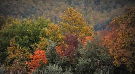 In autumn, every tree has its own color Stock Photo - 15886300