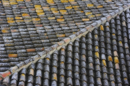 protagonists: The white lichens of this roof are the protagonists of this photo
