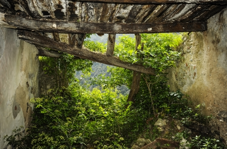enters: Nature enters in the ruined house