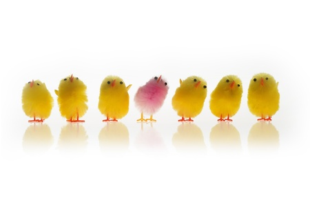 Group of Easter chicks isolated on white Stock Photo