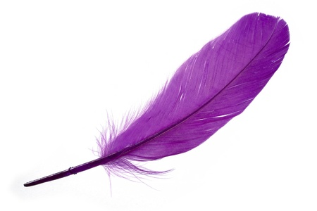 falling feather: Violet Feather with white background Stock Photo