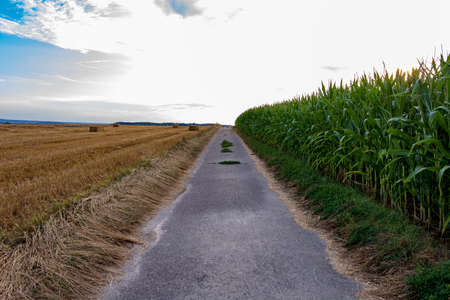 Empty road in rural agricultural landscape against cloudy sky with diminishing perspective in summer in Möckmühl, Germany