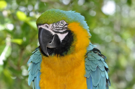 polly: Colorful Macaw Parrot sitting on the tree branch