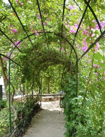 Garden Arbor Stock Photo - 15689014