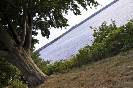 typical: A tree isolated  In the background a typical pacific northwest landscape  Stock Photo