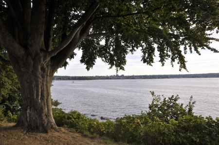 A tree isolated  In the background a typical pacific northwest landscape  Banque d'images