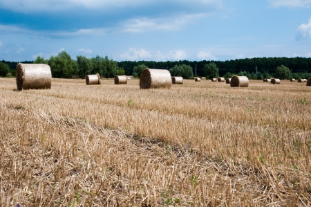 agronomic: Pile of Stack hay on  a summer field   Stock Photo