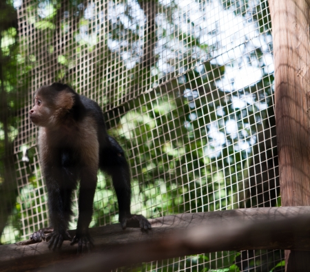 A lovely monkey in the cage watching calmly outside Stock Photo - 18215649