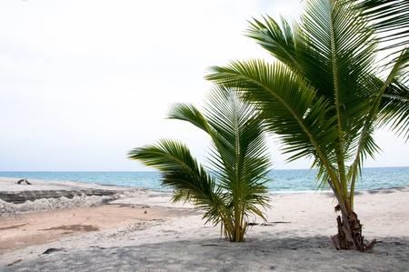 beatitude: Pacific coast of Panama with beautiful beach and trees