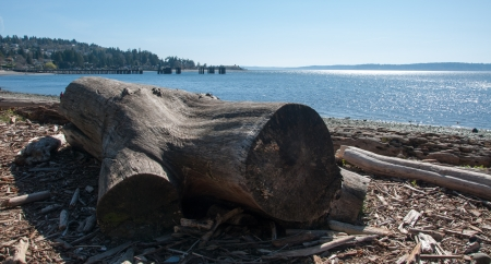 Drift wood on the beach in Pacific Northwest