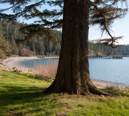 A trunk isolated  In the background a typical pacific northwest landscape  Banque d'images