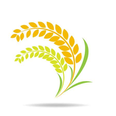 Rice organic Circle paddy grain products and healthy food design vector Ilustración de vector