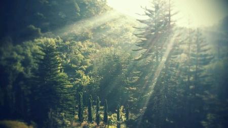 naturaleza: Naturaleza